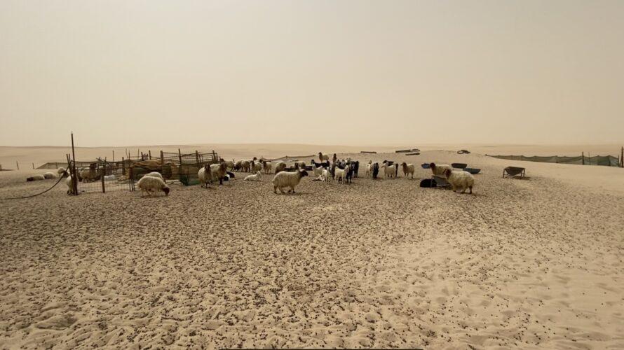 【悲報】海外駐在員の華やかな生活とは? サウジアラビアでの月の支出は幾ら?